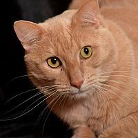 Adopt A Pet :: Max - Ft. Lauderdale, FL