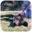 Photo 4 - Rottweiler/American Pit Bull Terrier Mix Dog for adoption in Berkeley, California - Hifee