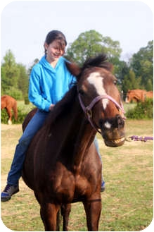 Thoroughbred for adoption in Huntersville, North Carolina - Fitok
