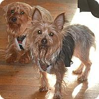 Adopt A Pet :: Petey & Petunia -- Bonded Pair - Greensboro, NC