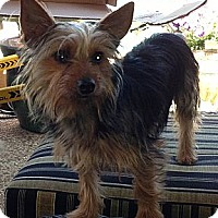 Adopt A Pet :: Jackpot - Yakima, WA
