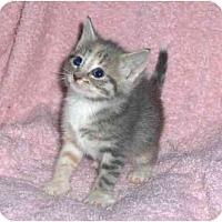 Adopt A Pet :: Monet - Richmond, VA
