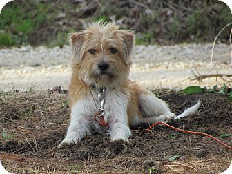 Terrier (Unknown Type, Small) Mix Dog for adoption in Bedminster, New Jersey - QUINCY