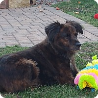 Adopt A Pet :: Brandi - Minneapolis, MN