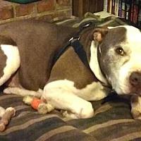 Adopt A Pet :: Lucky - CARISLE, PA