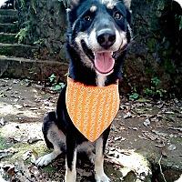 Adopt A Pet :: Stelly - Marina del Rey, CA