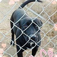 Adopt A Pet :: CeCe - Odessa, TX