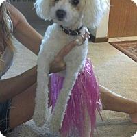 Adopt A Pet :: Max - Morgantown, WV