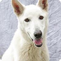 Adopt A Pet :: Apollo - Inverness, FL