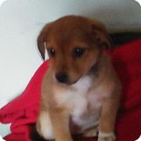 Adopt A Pet :: Manny - Treton, ON
