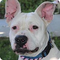 Adopt A Pet :: JELLY BEAN - Red Bluff, CA