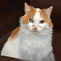 Adopt A Pet :: Lucca - Davis, CA