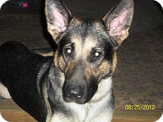 German Shepherd Dog Dog for adoption in Greeneville, Tennessee - Kiley