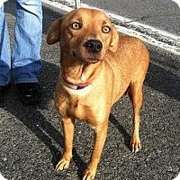 Adopt A Pet :: Jewlee - Seattle, WA