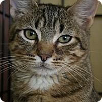 Adopt A Pet :: Jane - Frederick, MD
