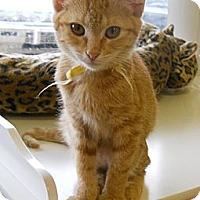 Adopt A Pet :: Rebecca - Mobile, AL