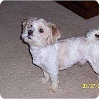 Adopt A Pet :: Buddy - Crofton, MD
