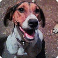 Adopt A Pet :: Windy - Northumberland, ON