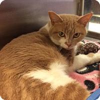 Adopt A Pet :: Anna - Byron Center, MI