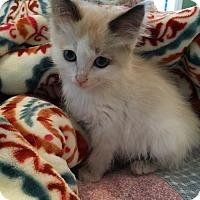 Adopt A Pet :: BUNNY - Lakewood, CA