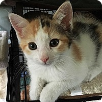 Adopt A Pet :: Lexi - N. Billerica, MA