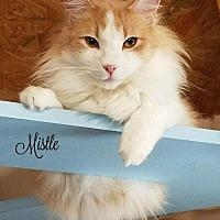 Adopt A Pet :: Mistle - Benton, LA