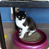 Adopt A Pet :: Nadia - Wilmington, OH