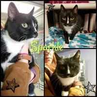 Adopt A Pet :: Sparkle - Greenville, NC