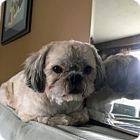 Adopt A Pet :: Kingsley - Mississauga, ON