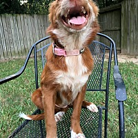 Adopt A Pet :: Poppy - Boston, MA