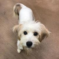 Adopt A Pet :: Kiwi - Cleveland, OH