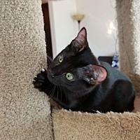 Adopt A Pet :: Roxy - Charlotte, NC