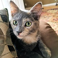 Adopt A Pet :: Beauty - Petersburg, VA