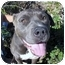 Photo 1 - American Staffordshire Terrier/American Pit Bull Terrier Mix Dog for adoption in Bellflower, California - Louie