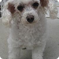 Adopt A Pet :: Zeus - Dover, MA
