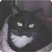 Adopt A Pet :: Lakota - Lunenburg, MA