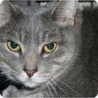Adopt A Pet :: Mr Ed - Frederick, MD