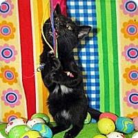 Adopt A Pet :: Joon - Orlando, FL