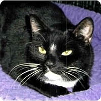 Adopt A Pet :: Star and Lacey - Medway, MA