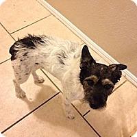 Adopt A Pet :: Elliot - Oklahoma City, OK