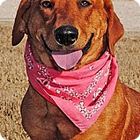 Adopt A Pet :: Vicky - Gonzales, TX