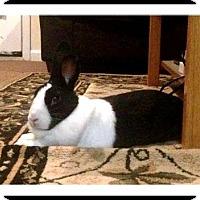 Adopt A Pet :: Ashka - Williston, FL