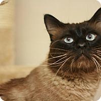 Adopt A Pet :: Bonsai - Canoga Park, CA