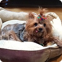 Adopt A Pet :: Maggie Sue - Tallahassee, FL