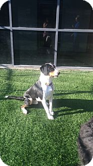 Hound (Unknown Type)/Border Collie Mix Dog for adoption in Meridian, Idaho - Wallace