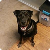 Adopt A Pet :: Tex - Austin, TX