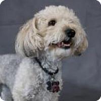Adopt A Pet :: Bobby - Mt Gretna, PA