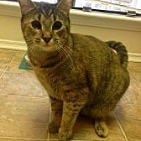 Adopt A Pet :: Veruca - Marietta, GA