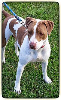 Terrier (Unknown Type, Medium) Mix Dog for adoption in Williamsburg, Virginia - Linda