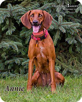 Redbone Coonhound/Coonhound Mix Dog for adoption in Fremont, Michigan - Annie Oakley